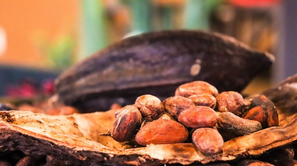 Kakao pur (100%) Das Getränk der Götter